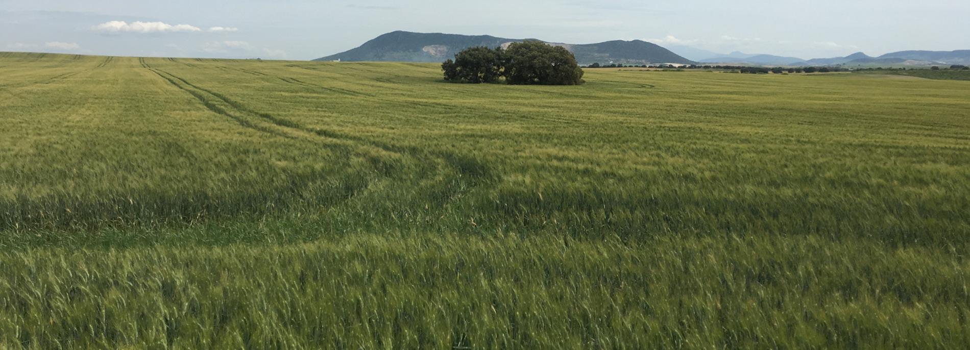Una finca tipo labor secano con unos árboles dentro de un prado