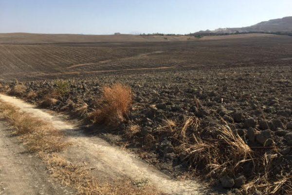 finca agrícola de secano