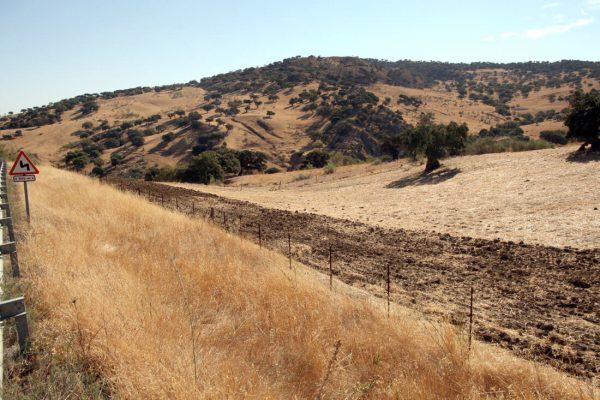 finca agrícola ganadera