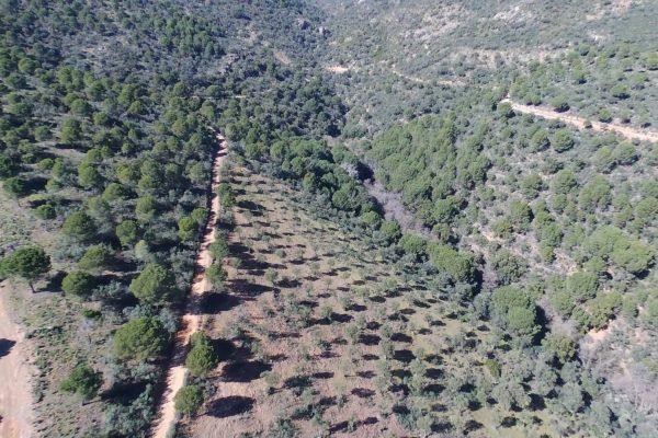 finca de ca za ,olivar ecológica
