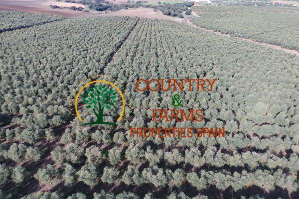 finca olivar intensivo riego